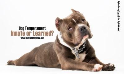 dog temperament