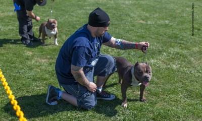 Bully Breed Dog Dehydration