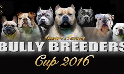 ABKC Bully Breeders Cup 2016