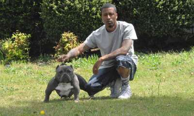 Swaggerville Exotic Bullies