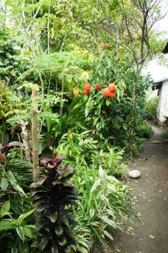 Assorted vegetables, medicinal and ornamental plants grow side by side in Oya Panya's garden.