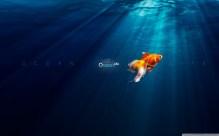 ocean_life-1280x800
