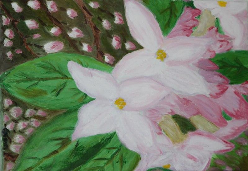 daphneflower
