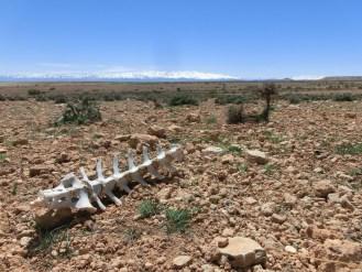 marocco2015_030