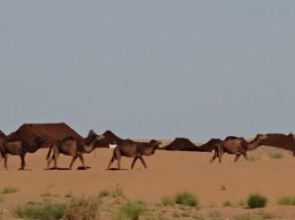 marocco2015_089