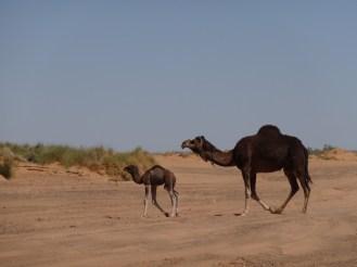 marocco2015_096