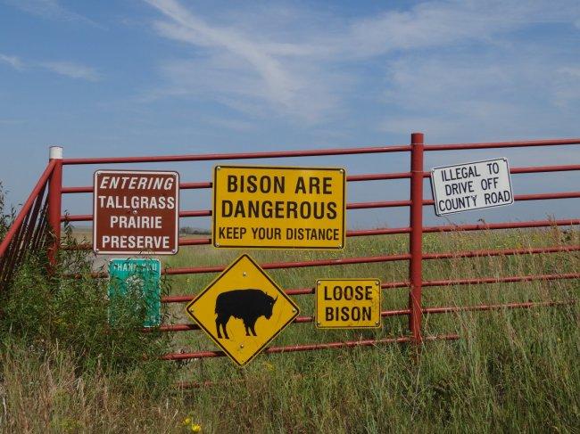 Achtung Bison