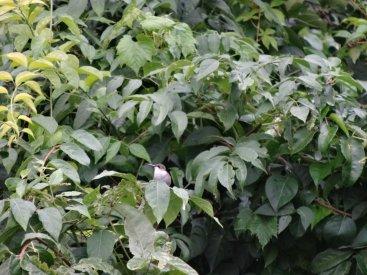 Wer sieht den Kolibri?