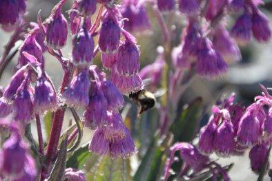 Fleißige Bienen hält auch nicht die Höhe ab