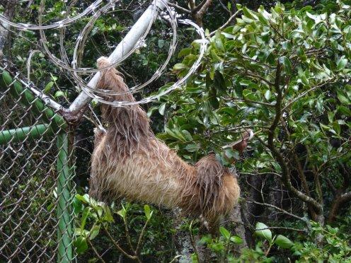...durch einen Zaun um zum nächsten Baum zu kommen