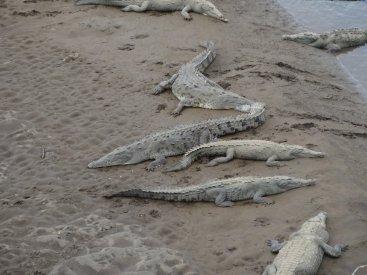Die meisten Tiere dösten auf den Sandbänken