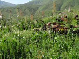 Natürliche Rasenmäher - funktioniert auch bei hohem Gras