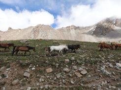 Kirgistan_178