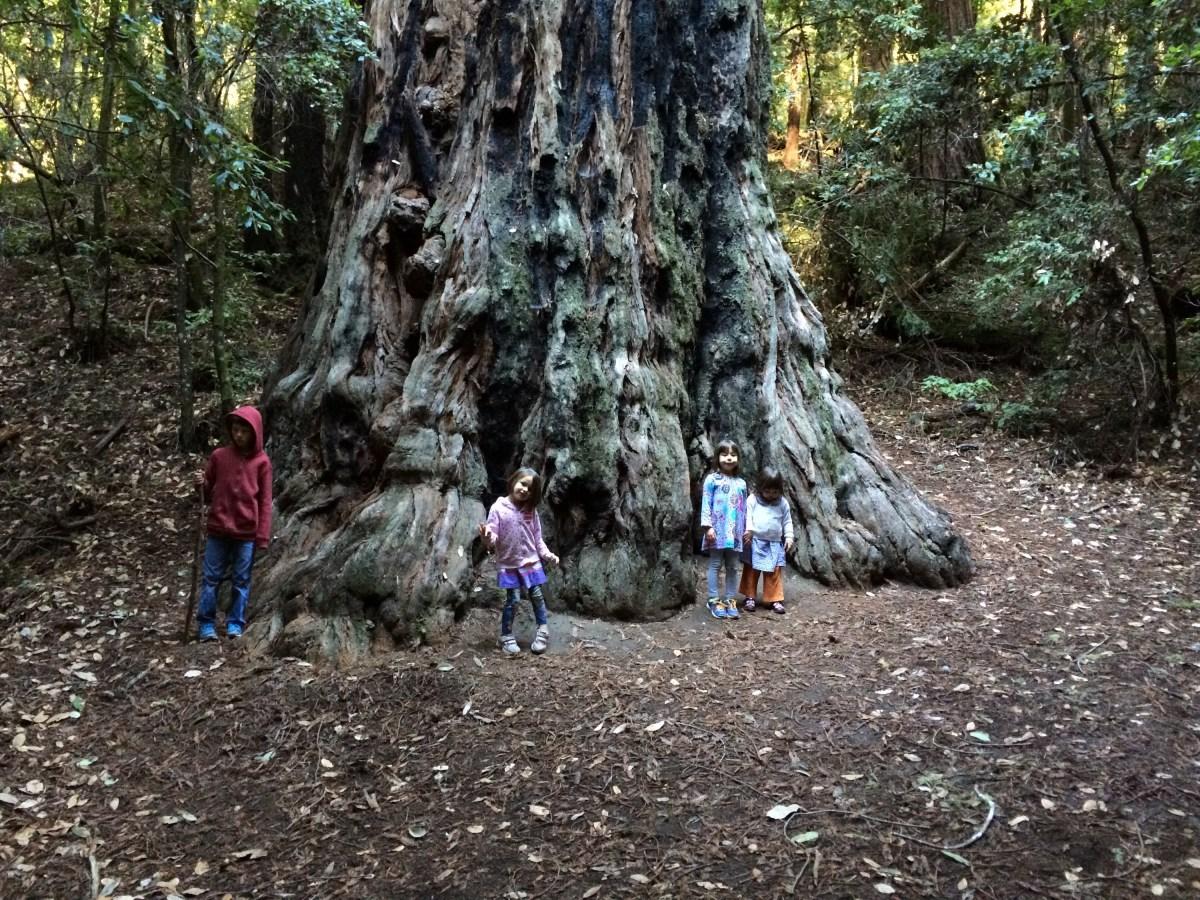 Portola Redwoods State Park day trip