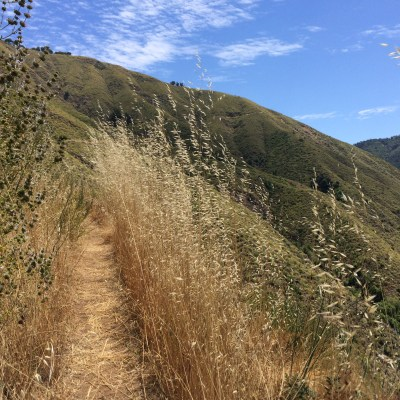 Mount Manuel Trail *DNF* (Pfeiffer Big Sur State Park)