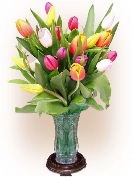 bunga tulip pelangi