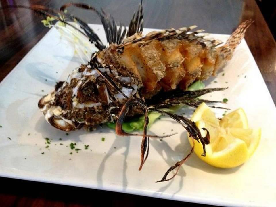 Ideas Hosts Sustainable Dinner Featuring Invasive Species