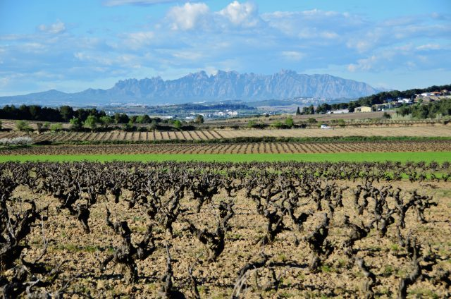 best-day-trips-from-barcelona-penedes