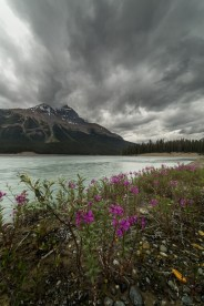 Rain might not sound great to a lot of traveler. But it could be a great condition for some photo oppotunities. Especially when you are in the Canadian Rockies