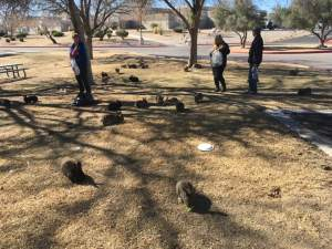 Volunteers Feeding The Bunnies