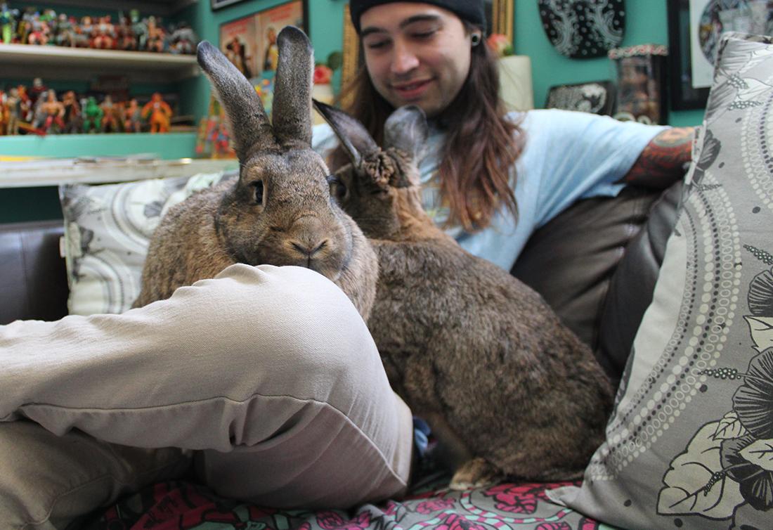 Bunnysitters