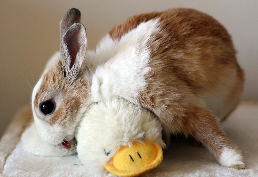 28 Lifesaving Bunny Facts