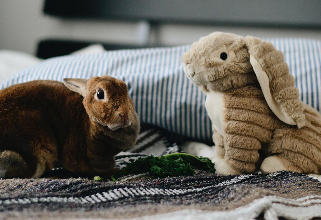Sexual maturity of rabbits