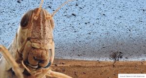 sexy passover Locusts