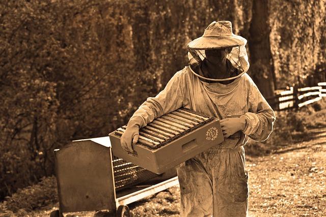 my own bee farm