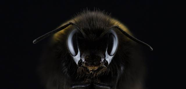 Save The Bees So I Can Keep Using Their Venom To Get High