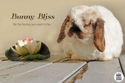 tofu-bunny-bliss8