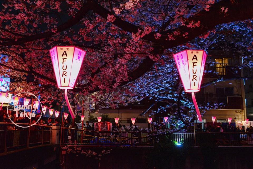 Tokyo Hanami 2019: Naka-Meguro
