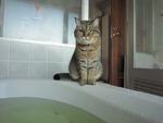 お風呂を見張る