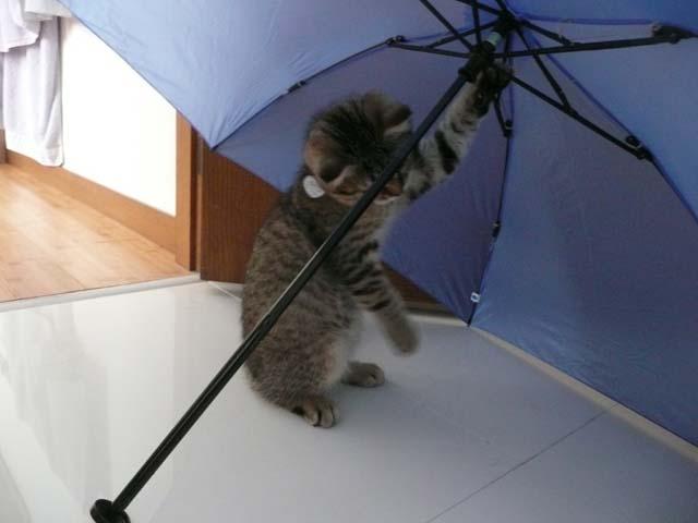 与六と傘2