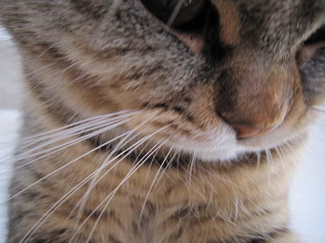 猫のヒゲ3