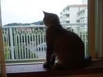 窓辺で待つ与六
