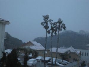 雪のパームツリー