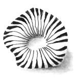 Zentangle Muster Pepper