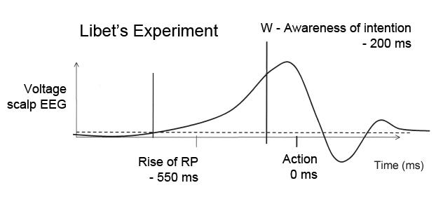libet esperimento grafico