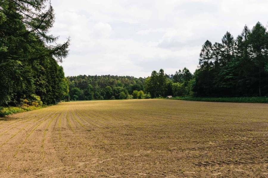 Ein Feld mit Blick auf den Wald