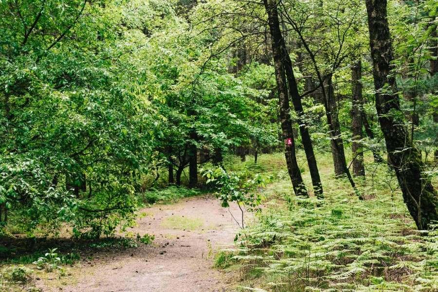 Mitten im Wald, mit Blick auf einen Hohe Mark Steig Wegweiser