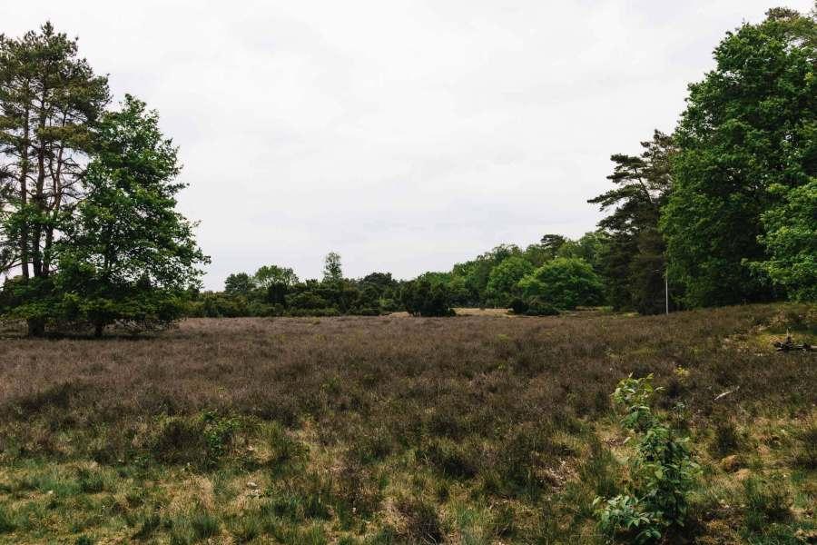 In der Westruper Heide bei Haltern