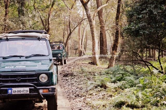 #junglesafari #points #travelblogger #guwahatiblogger