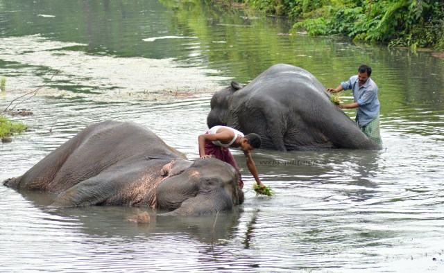#elephantbath #manasnationalpark