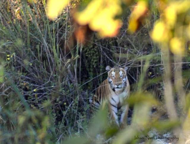 #kaziranganationalpark #assam #nationalpark #northeast #awesomeassam