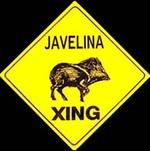 Javelina_crossing_1