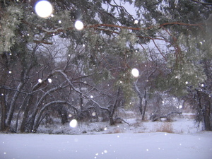 Morning_snowfall_006