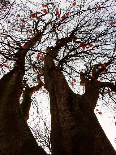 Tree_from_paradises_flickr