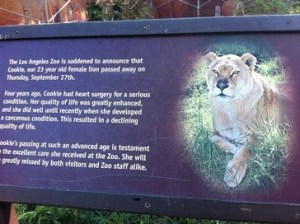 The Lion, A Sign and A Heart Condition