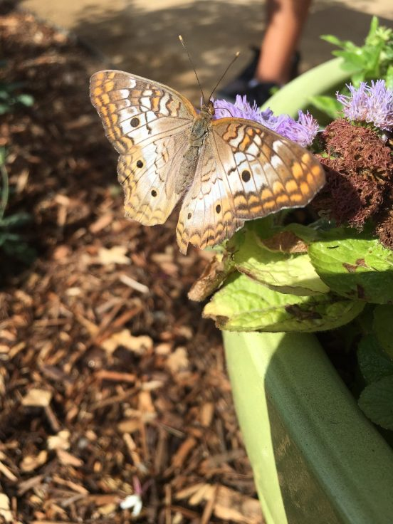 Where Have All Monarchs Gone >> Everything You Need To Know About The Butterfly Pavilion At The Natural History Museum, Now Open ...